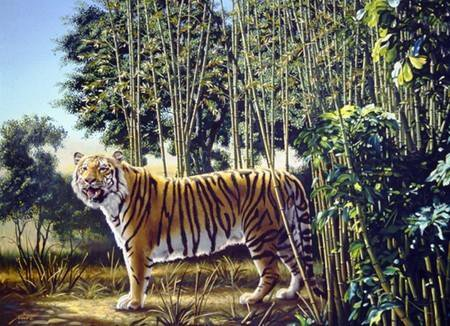 Image : The Hidden Tiger (Illusion d'optique)