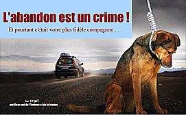 Cet été, dites STOP à l'abandon des animaux de compagnie - videos & photos