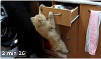 les chats casse-gueule - video