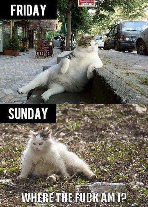 C'est vendredi, bon week-end !