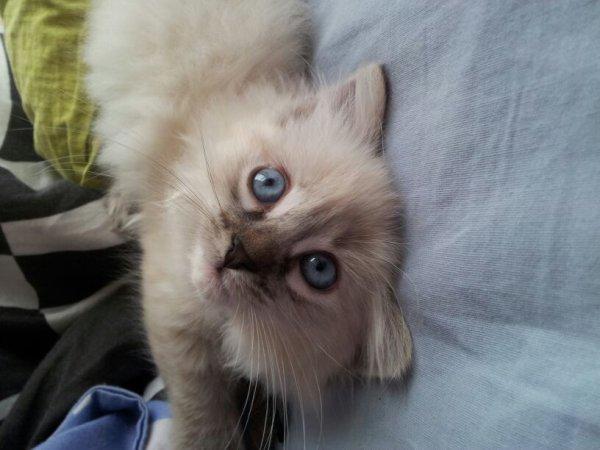 ma belle hadés avec ses jolie yeux bleu