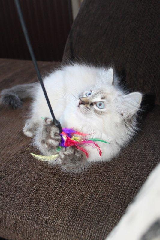 Ma belle hades qui joue avec son plumeau =)