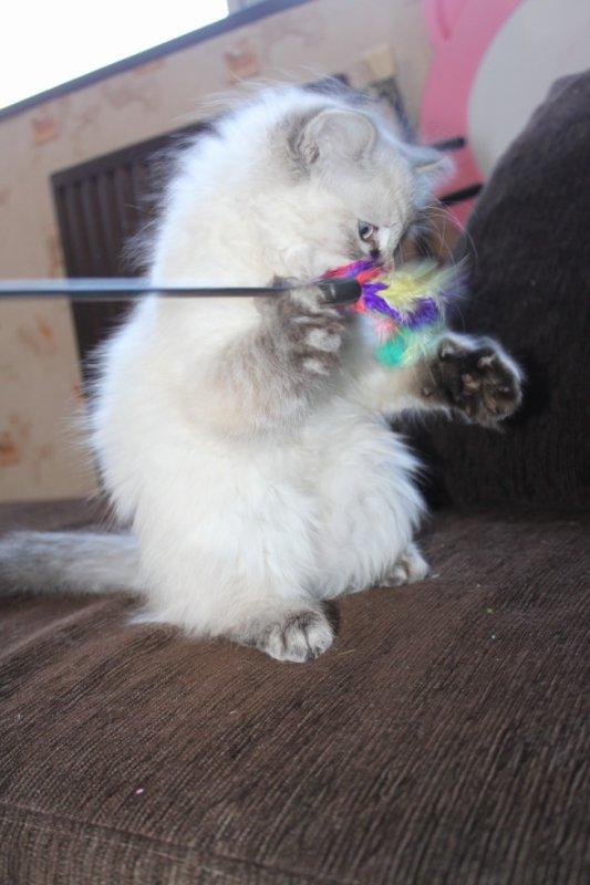 Hdes qui joue avec son plumeau =)