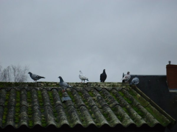 mes 1 ans en ballade sur le toit de ma dependance