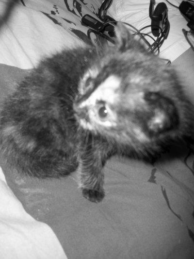 Leila, ma petite chérie ! (a)