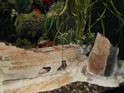 l'aquarium.... plaisir de ma tite femme d'amour