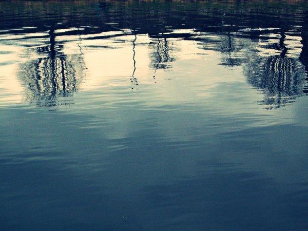 Déraciné des eaux