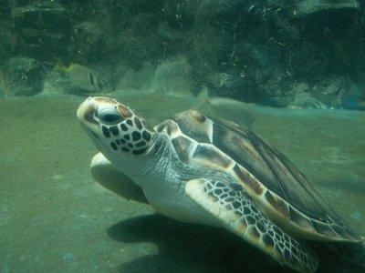 Les tortue , elle aussi on le droit de vivre !