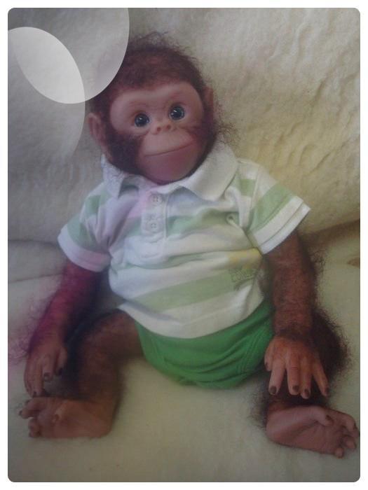 Un petit chimpanzé est passé par là .............