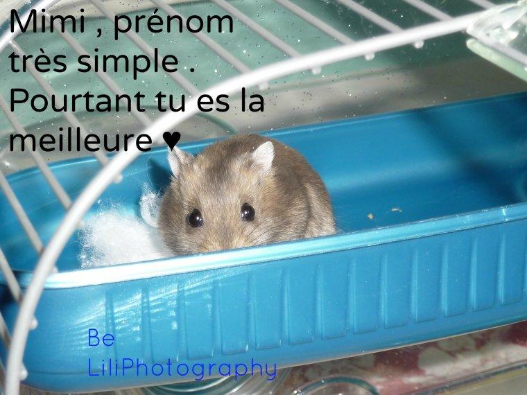 Mon hamster , Mimi