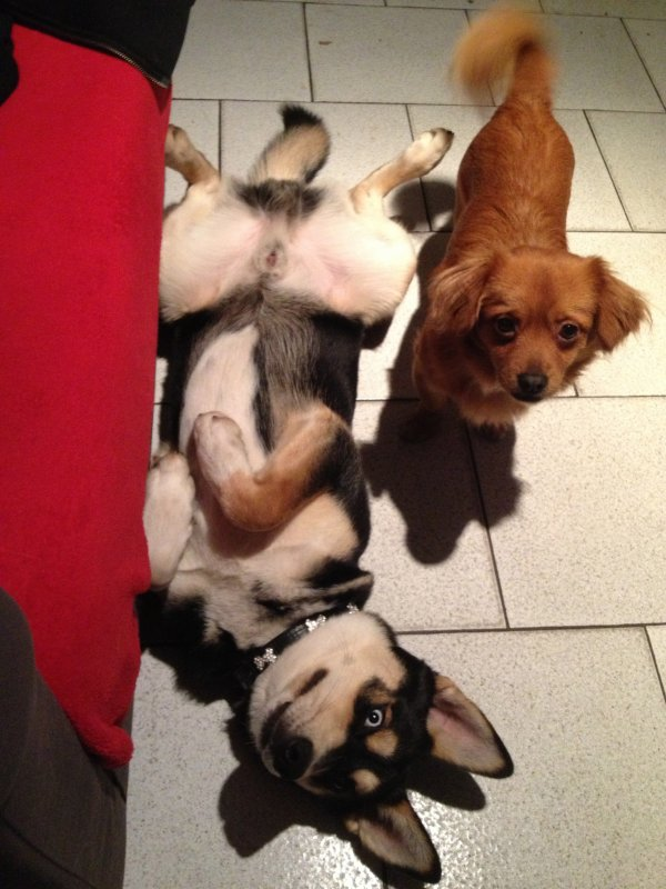 Mes chiens... ♥