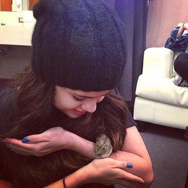 El nuevo hamster de Justin Bieber