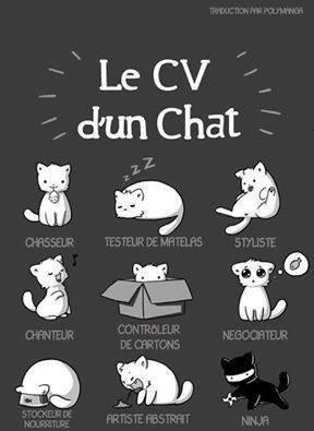 Voulez-vous recruter un chat ? Ou être un chat ?