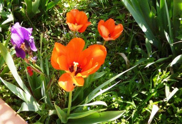 mes fleurs de printemps Un simple regard posé sur une fleur et voilà une journée remplie de bonheur.