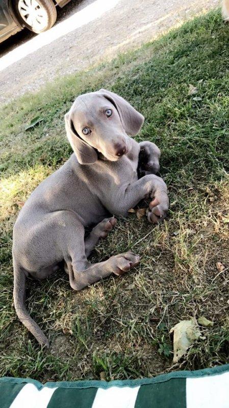 ma chienne NADIE