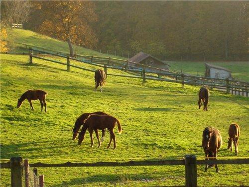 L'environnement du cheval
