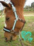 Photo de my-Horse-Piica