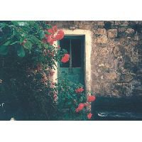 « Lorsqu'une porte du bonheur se ferme, une autre s'ouvre ; mais parfois on observe si longtemps celle qui est fermée qu'on ne voit pas celle qui vient de s'ouvrir à nous. » ♥
