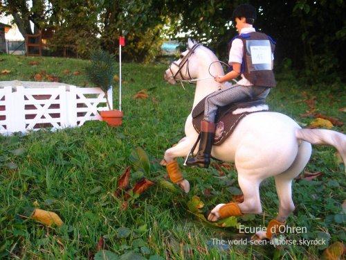 Résultats des chevaux