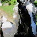 Photo de The-world-seen-a-horse