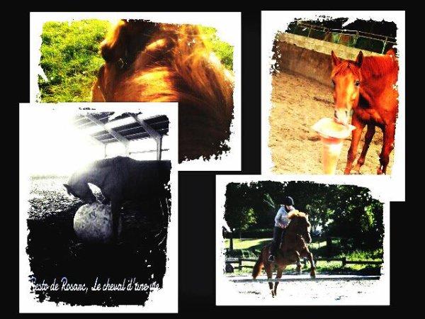 ♥  Mon amour de poney : Tiesto de Rosarc ♥