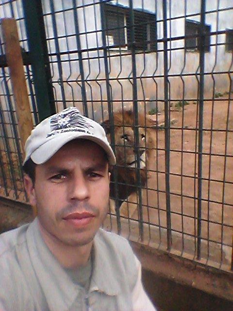 Cesar lion atlas