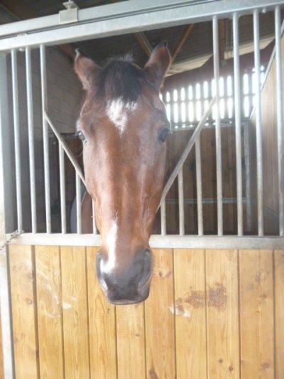 Fraîche matinée d'Equitation : 1er passage