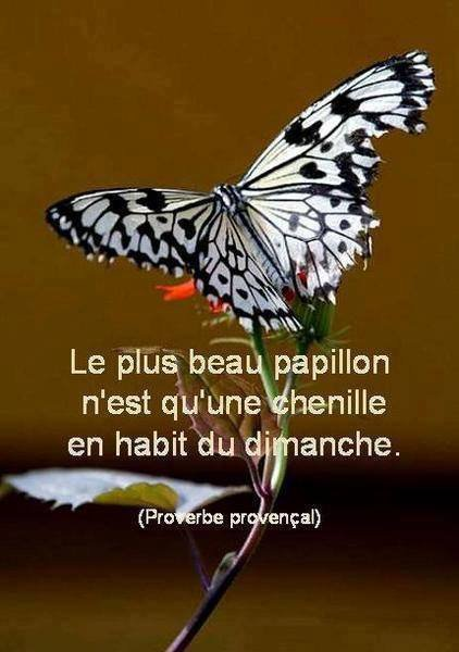 Citations du jour