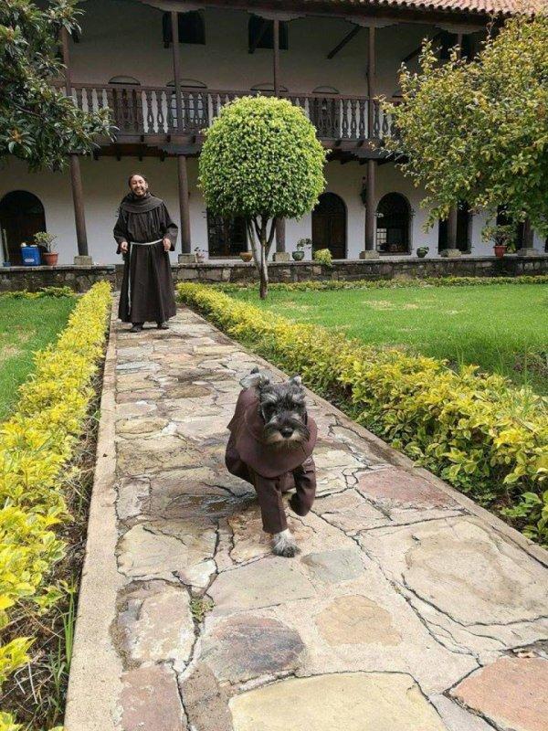 Adorable chien recueilli et devenu moine