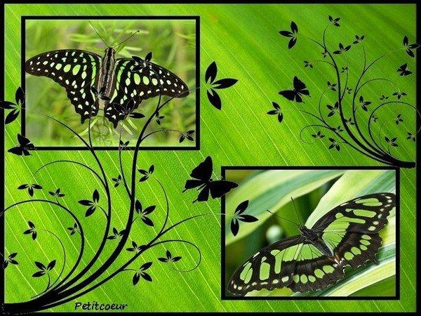 La légende des papillons : légende amérindienne