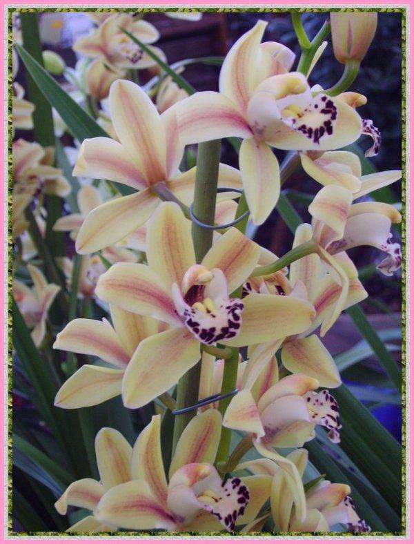 Des fleurs, pour le plaisir