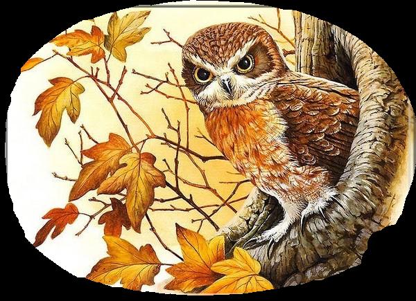 L'automne... La saison préférée des poètes !