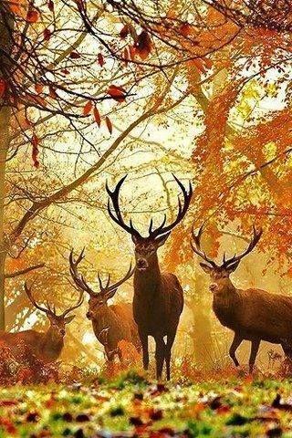 Le spectacle de la nature est toujours beau