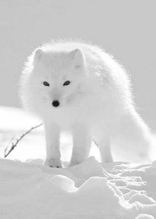 L'hiver, d'où le changement de couleur chez certains animaux !