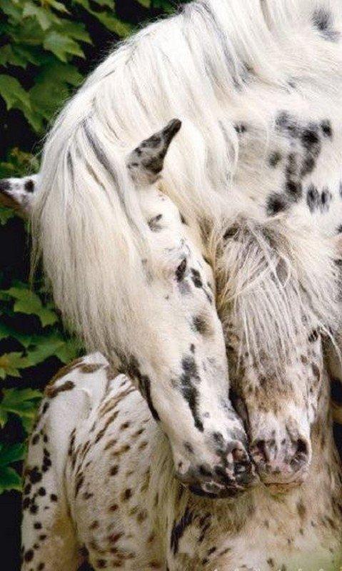 Pour les amoureux des chevaux