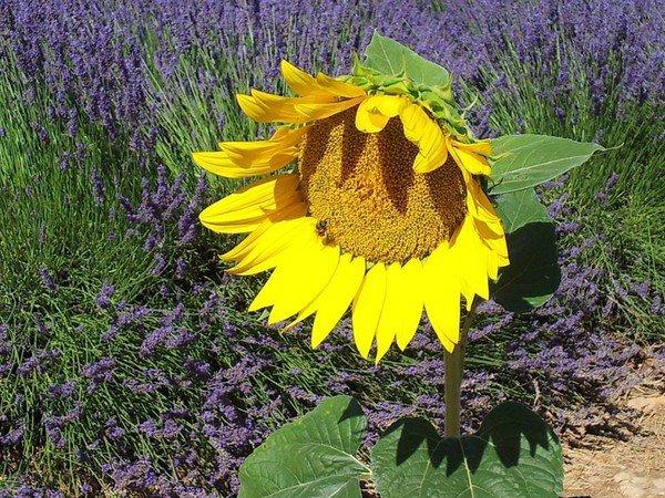 La Fée aux yeux bleus : légende de Provence...