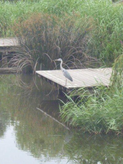 """Balade ludique au bord du """" canal """""""