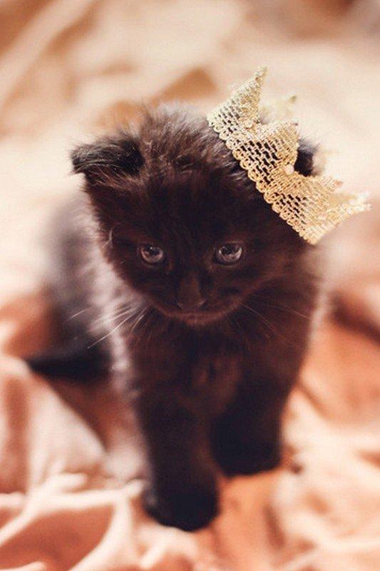 C'est la journée du chat !