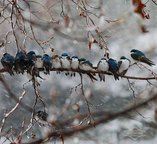 Les oiseaux nous quittent pour les pays plus chauds !
