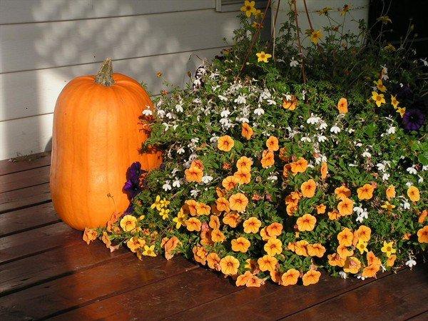 Octobre s'invite au jardin