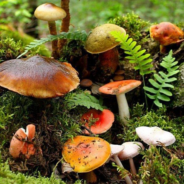 Les trésors de l'automne