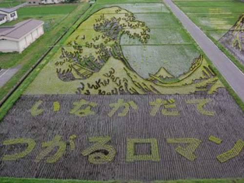 L'art des rizières au Japon