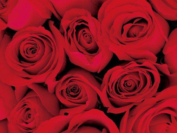 Lits de roses