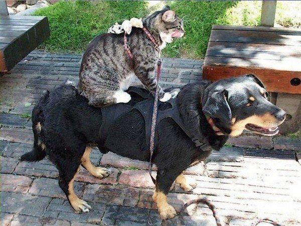 Tendresse animale