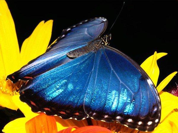 Vole petit papillon !