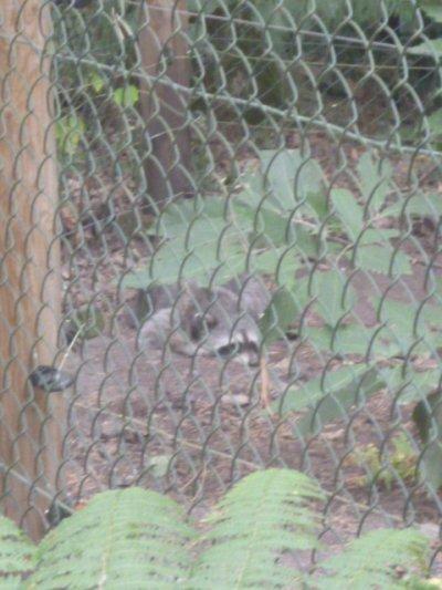 Visite à ma meute de loups préférée et aux nouveaux venus du parc Argonne Découverte