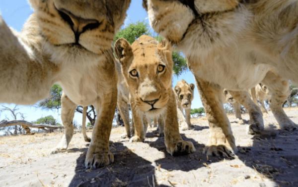 Quand les animaux prennent des selfies