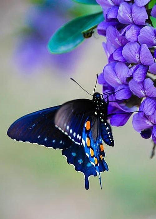 ça papillonne !