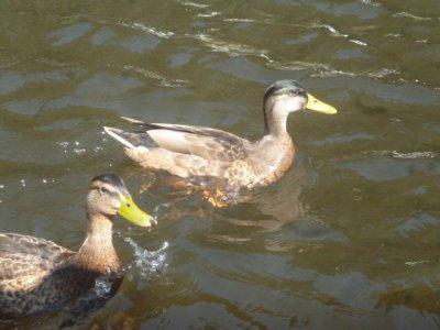 Pédalos et baignade dans la Semois