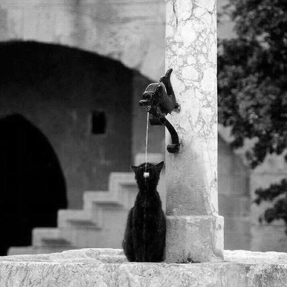 Journée internationale du chat noir